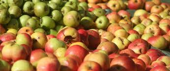 Pommes - Lagupie .com - 250 px